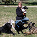 Taking Responsibility: what dog training can teach us about management